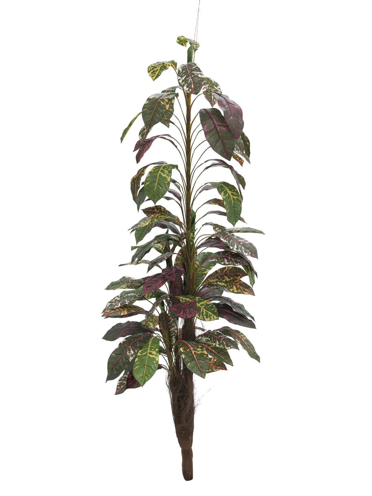 Billede af XL Palms, Kunstig Croton med Kokusnød stamme 180cm