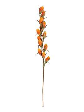 Europalms Buriti Branch (EVA), orange