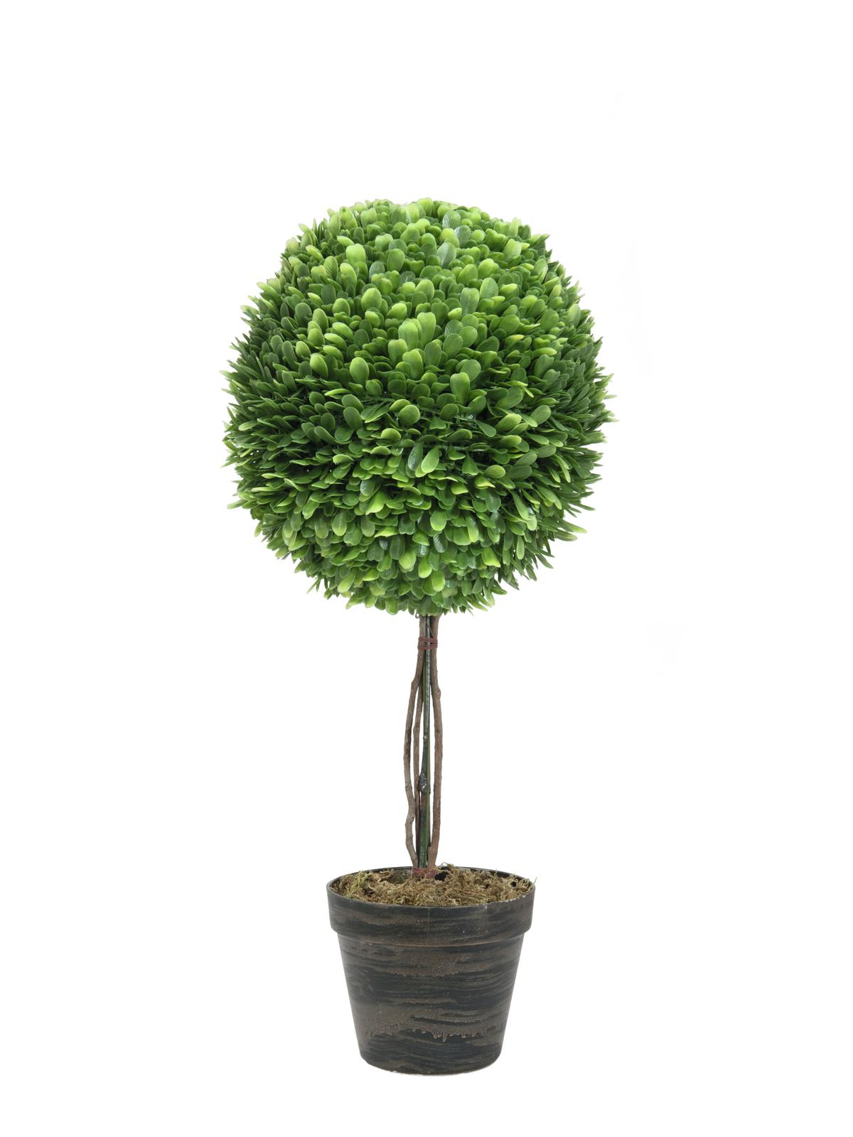 Image of   Kunstig Boxwood tree, 60cm