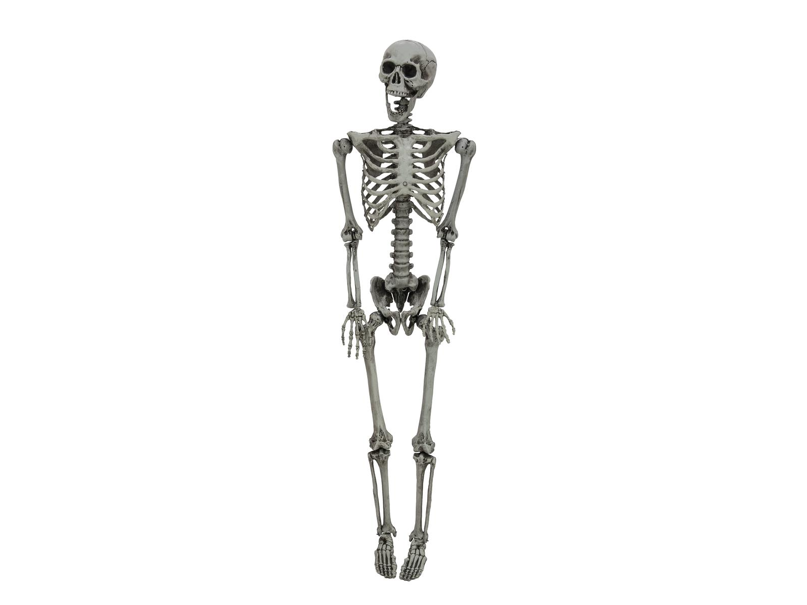 Image of   Halloween skelet, 160 cm