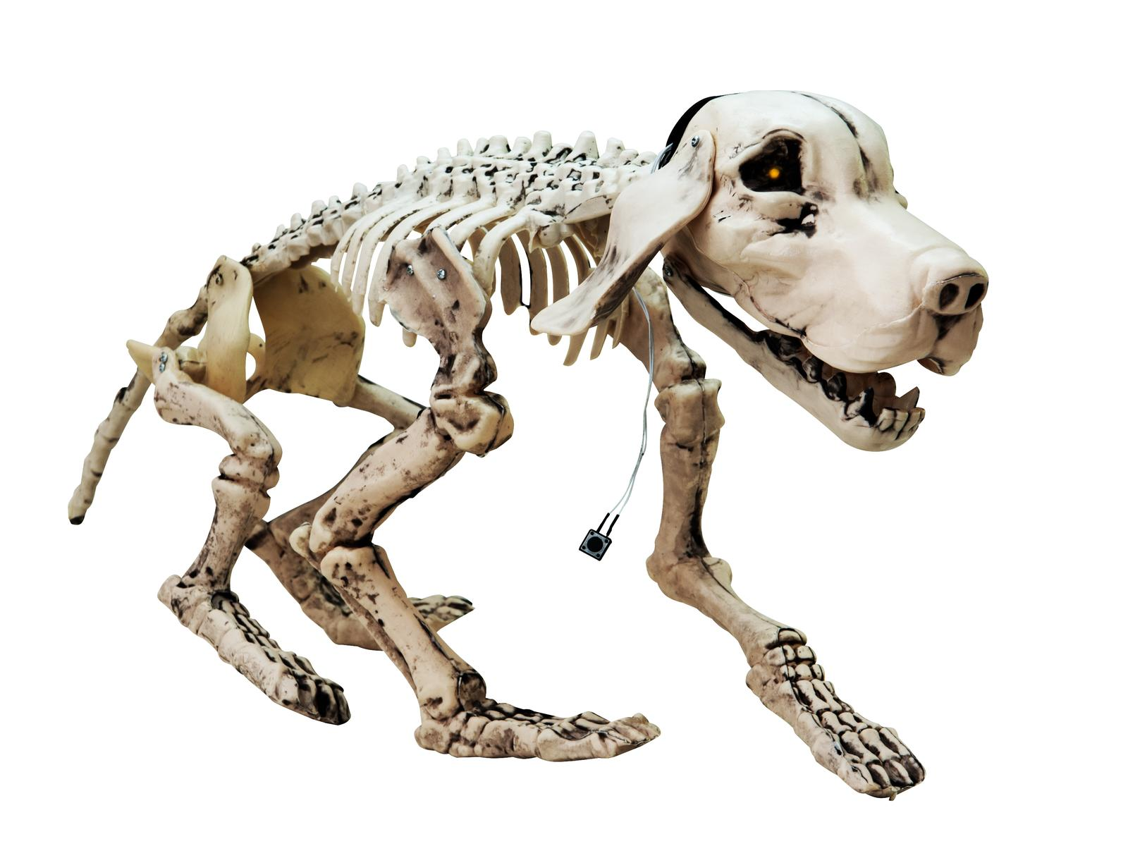Image of   Halloween skelet hund