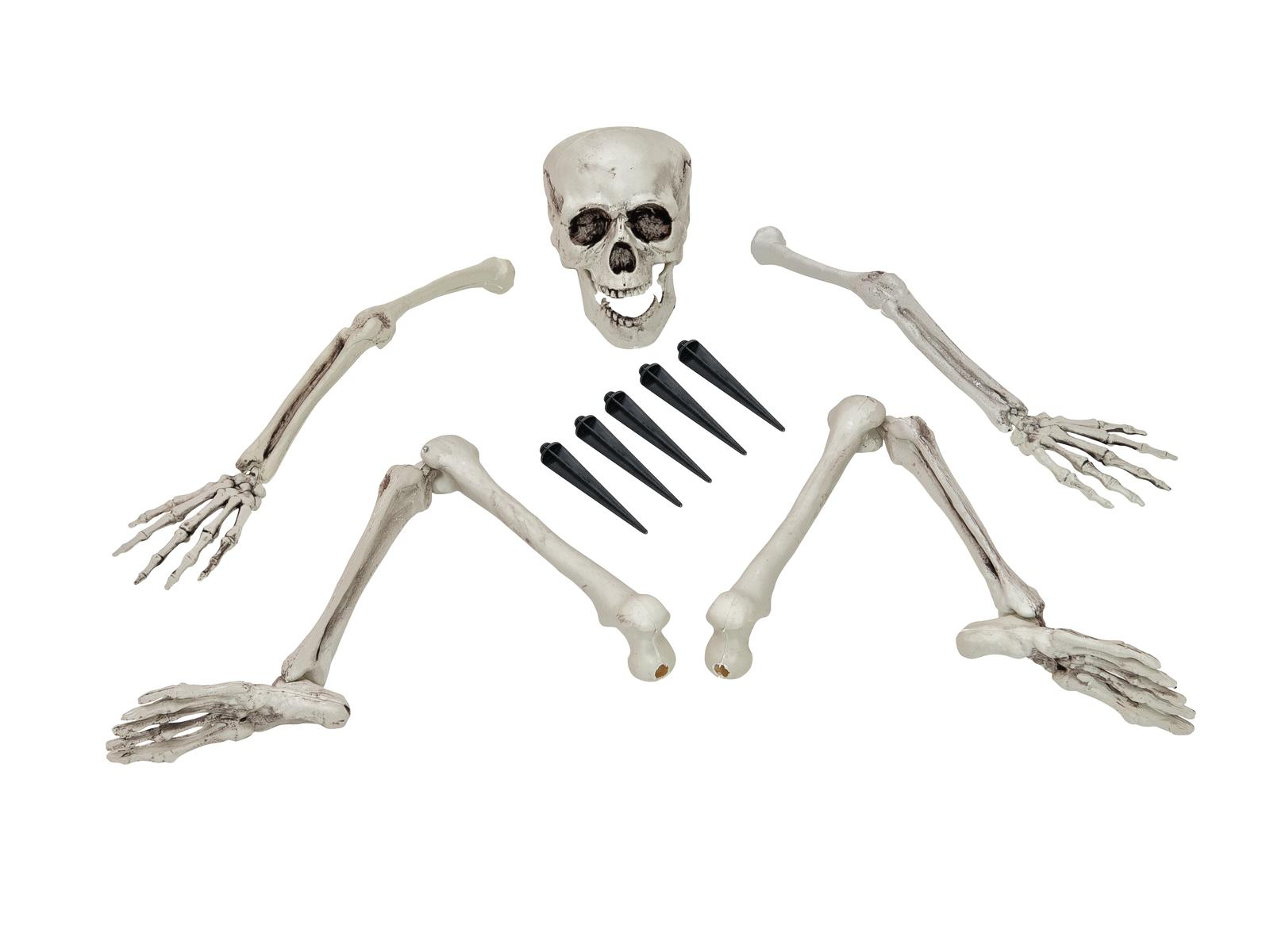 Image of   Halloween skelet i flere dele
