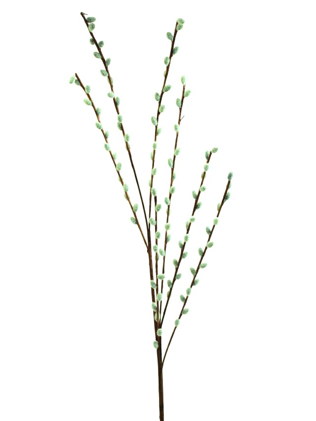 Image of   Kunstig Pussy willow spray, 117cm
