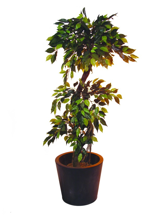 Image of   Kunstig Ficus Forest Tree, 150cm