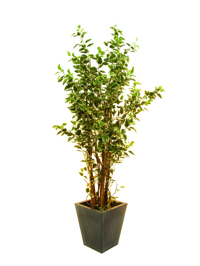 Image of   Kunstig Ficus tree deluxe, 240cm