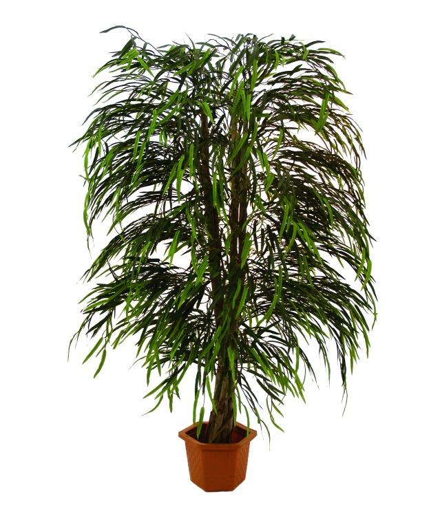 Billede af XL Palms, Kunstig Willow tree multileave, 215cm