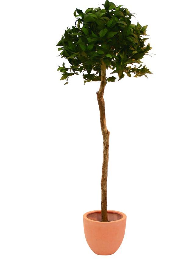 Billede af XL Palms, Kunstig Laure Balll Tree, 180cm