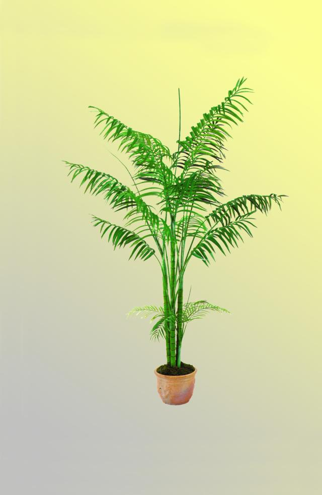 Kunstig Areca Palme, 4-stammet, 240 cm