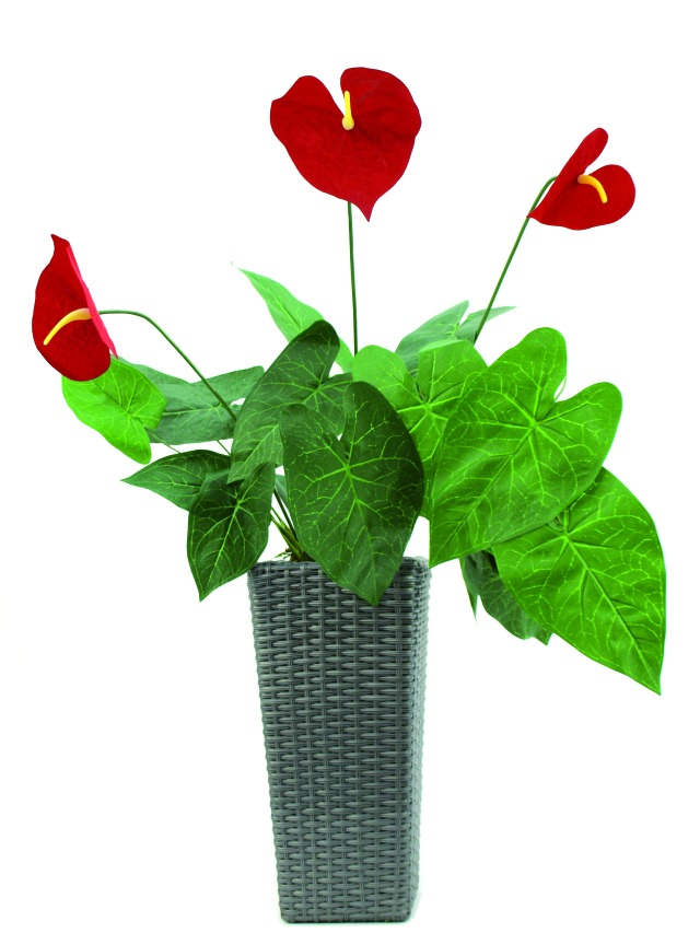 Image of   Kunstig Anthurium, 70cm