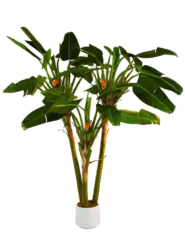 Kunstig Paradise palm, 250cm