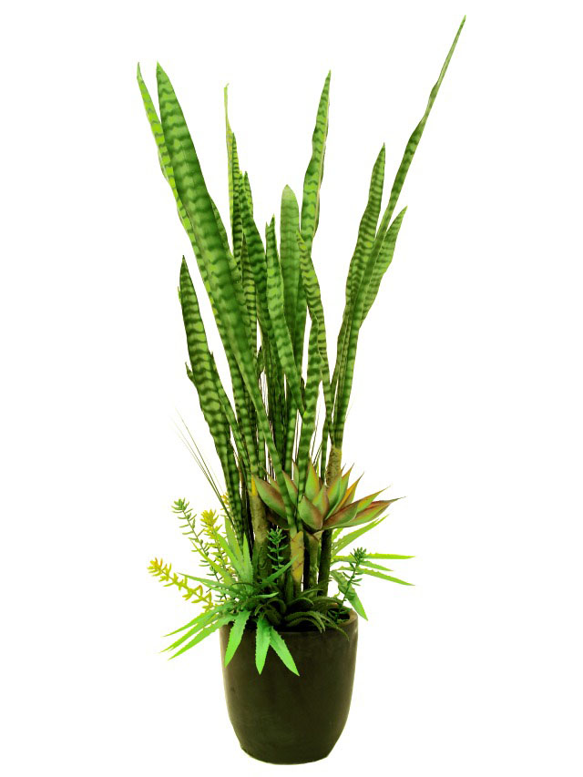 Specielle ørkenplanter