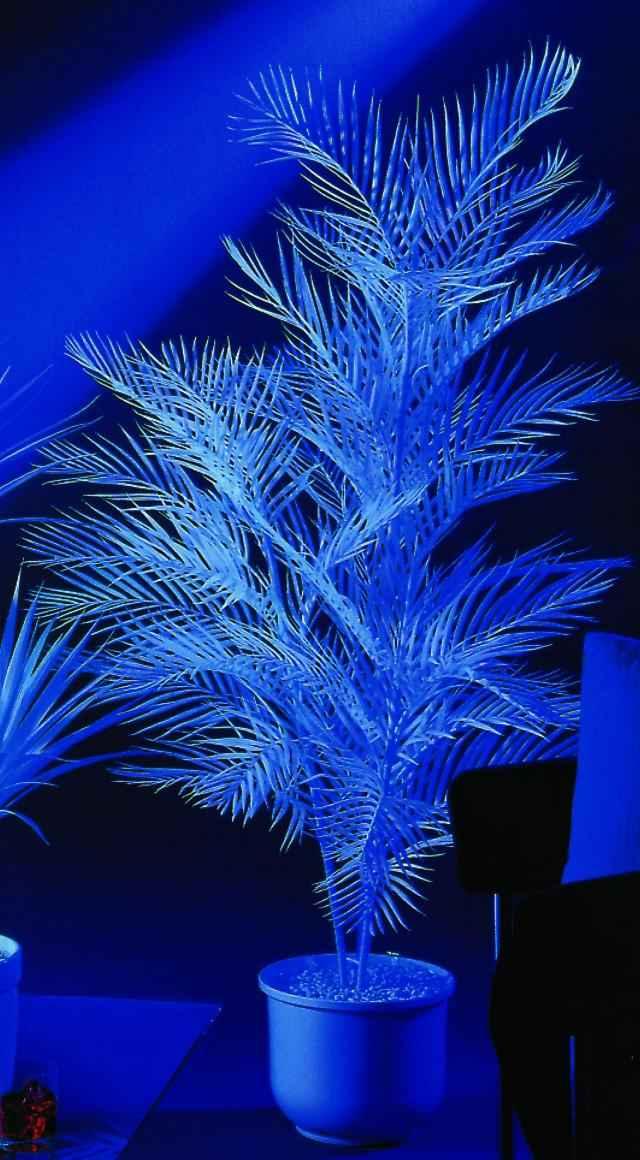 Kunstig Kentia Palmtree, uv-white, 90cm