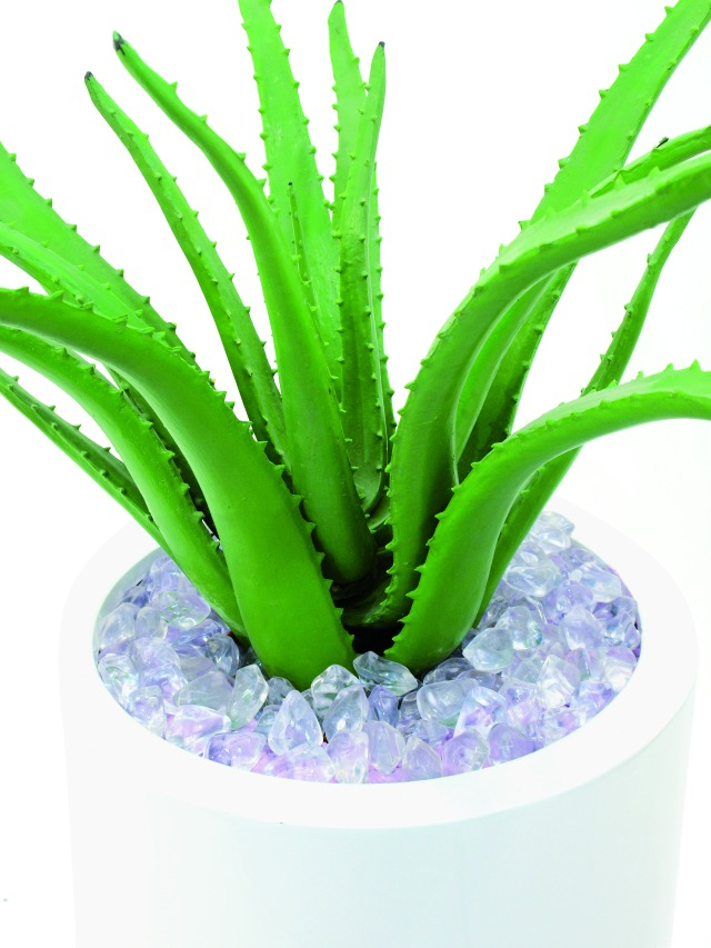 k b aloe vera plante 63 cm til 749 med prismatch hos. Black Bedroom Furniture Sets. Home Design Ideas